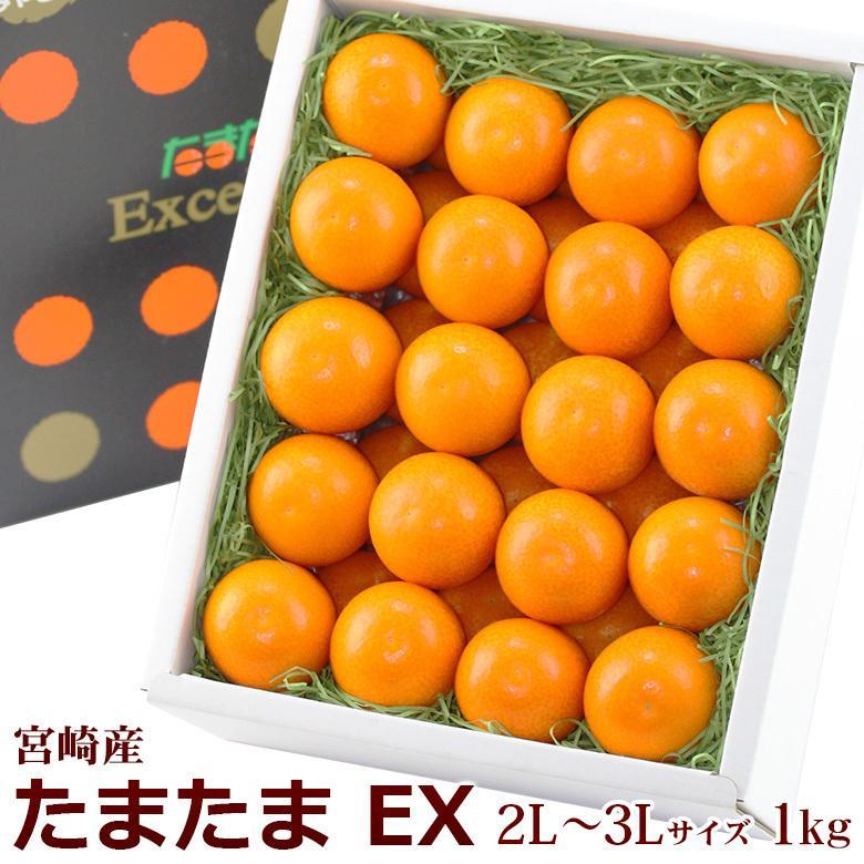 柑橘 フルーツ 果物 くだもの 桃の節句 ひなまつり ホワイトデー【完熟 金柑 たまたま EX (エクセレント) 2L〜3Lサイズ 約1kg】|aino-kajitu