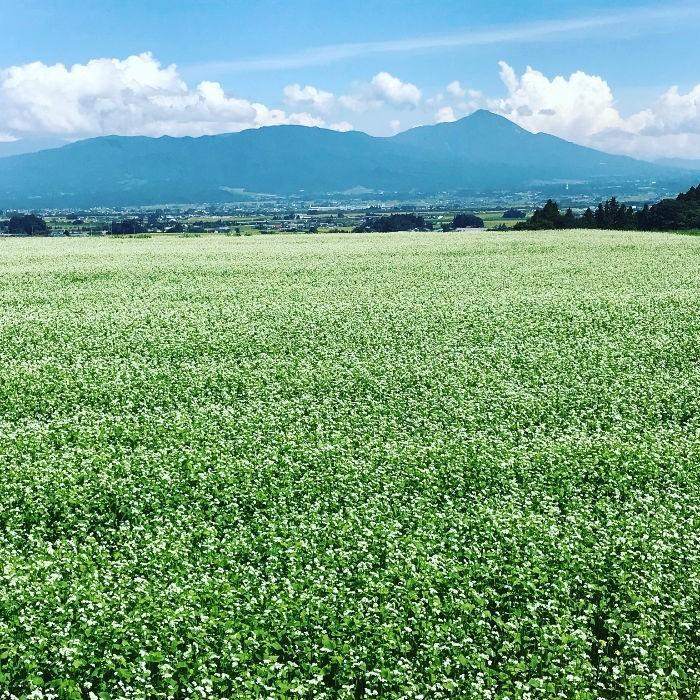 米 お米 5kg×2袋 玄米 2年産新米 会津米 ひとめぼれ 特A一等米使用  中部地方までの本州地域送料無料 ふくしまプライド。体感キャンペーン(お米)10kg|aizukome|17