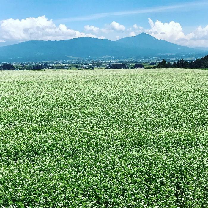 米 お米5kg×2袋 玄米 2年産新米 会津米 コシヒカリ 特A一等米使用  中部地方まで送料無料 ふくしまプライド。体感キャンペーン こしひかり 10kg|aizukome|21
