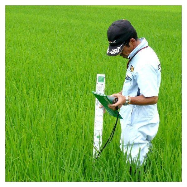 米 お米5kg 玄米 2年産新米 会津米 コシヒカリ 特A一等米使用  中部地方まで送料無料 ふくしまプライド。体感キャンペーン こしひかり|aizukome|11