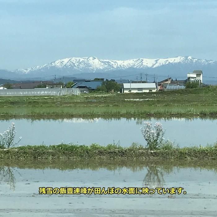 米 お米5kg 玄米 2年産新米 会津米 コシヒカリ 特A一等米使用  中部地方まで送料無料 ふくしまプライド。体感キャンペーン こしひかり|aizukome|19