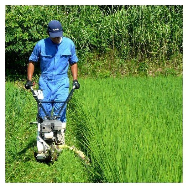 米 お米5kg 玄米 2年産新米 会津米 コシヒカリ 特A一等米使用  中部地方まで送料無料 ふくしまプライド。体感キャンペーン こしひかり|aizukome|10