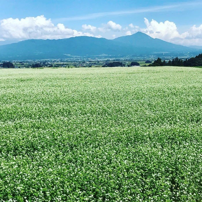 米 お米5kg 白米 2年産新米  純精米 会津米 コシヒカリ 特A一等米使用  中部地方までの本州地域送料無料 ふくしまプライド。体感キャンペーン こしひかり|aizukome|21
