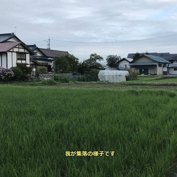 米 会津二色米 5kg×2 玄米 2年産新米 会津米 コシヒカリ+ひとめぼれ 中部地方までの本州地域送料無料|aizukome|20
