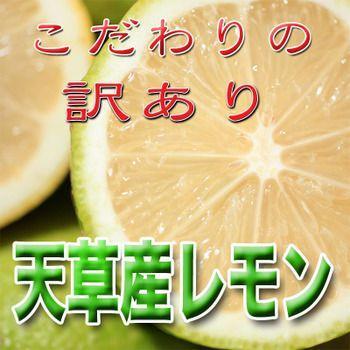 レモン 訳あり 国産 1kg入り 天草オーガニック 4月中旬以降は全国クール便配送  amakusaichiba