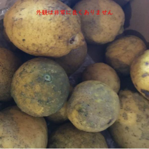 レモン 訳あり 国産 1kg入り 天草オーガニック 4月中旬以降は全国クール便配送  amakusaichiba 12