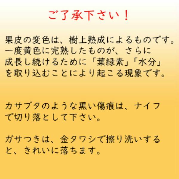 レモン 訳あり 国産 1kg入り 天草オーガニック 4月中旬以降は全国クール便配送  amakusaichiba 13