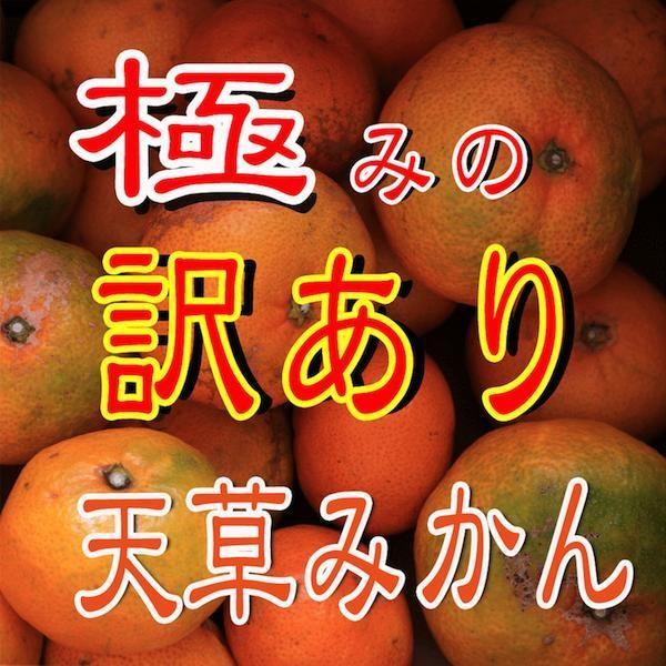 南柑20号5kg入り|amakusaichiba