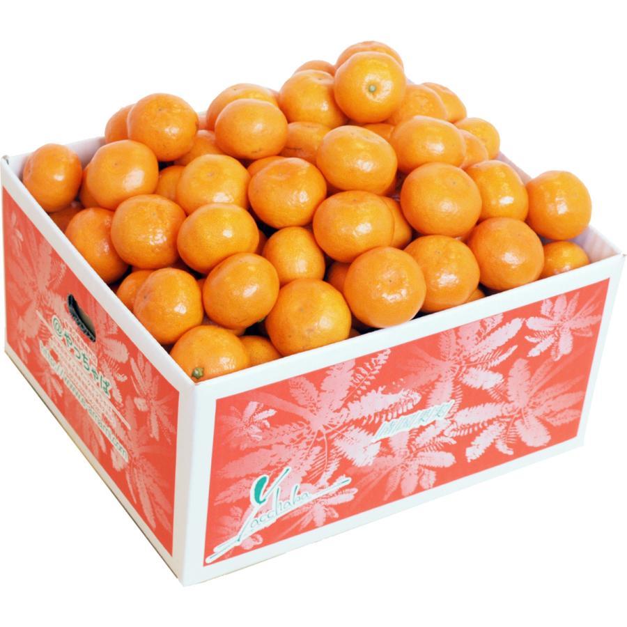 【糖度13度前後】 木場さんの堂脇みかん(S~3Sサイズ)|amami-fruit