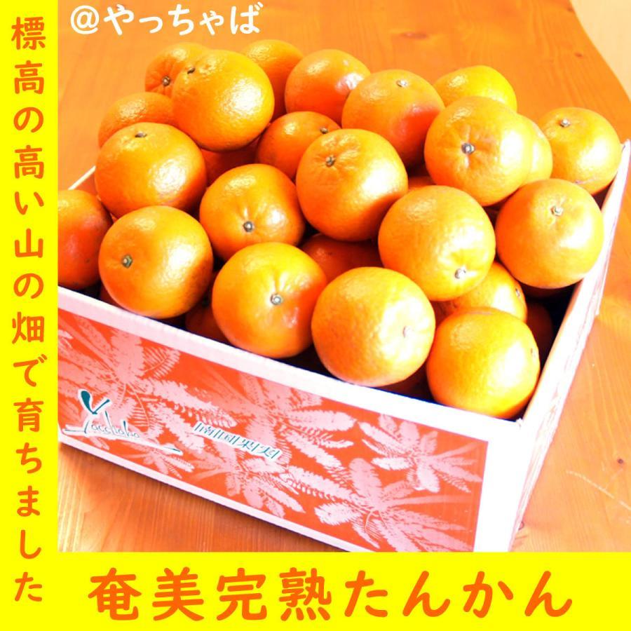 【糖度13度前後】奄美完熟たんかん(大玉:2L〜3Lサイズ) 5kg箱詰|amami-fruit