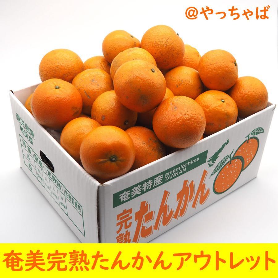 【お買い得】奄美完熟たんかんアウトレット(中玉:M〜Lサイズ) 5kg箱詰 amami-fruit