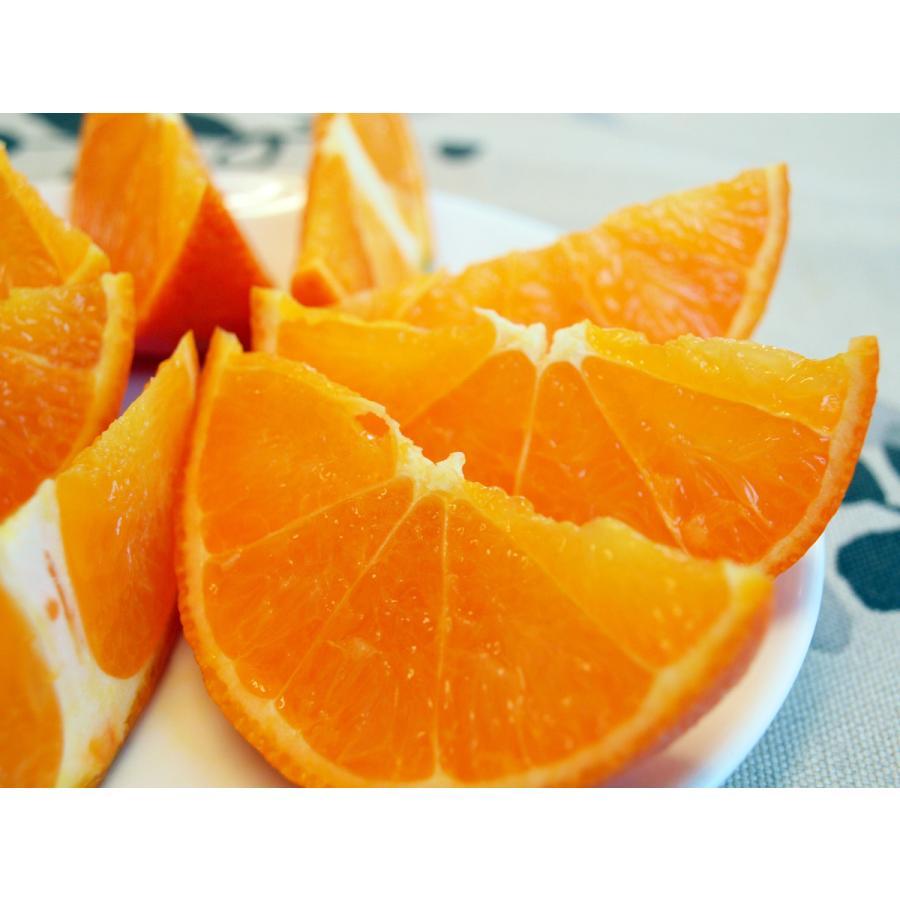 【お買い得】奄美完熟たんかんアウトレット(中玉:M〜Lサイズ) 5kg箱詰 amami-fruit 04