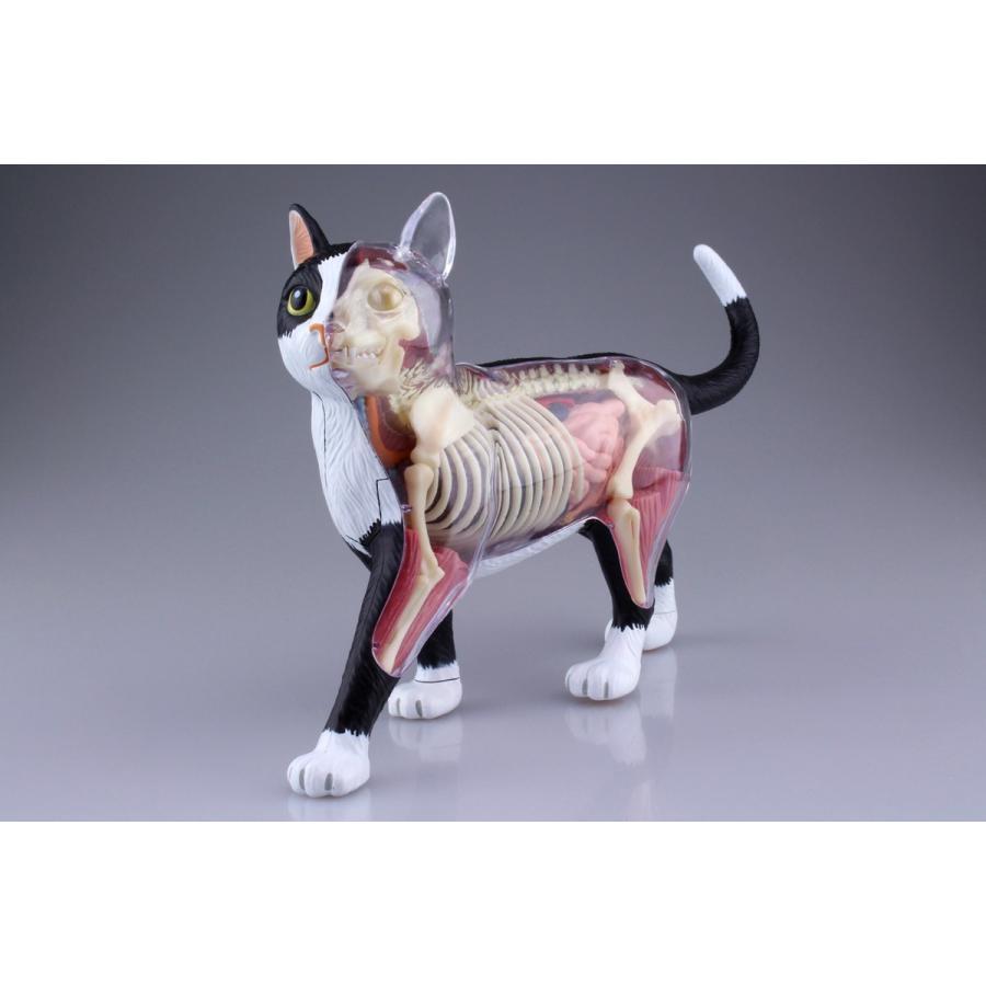 猫解剖モデル 黒/白  4D VISION 動物解剖モデル No.29 #立体パズル|aoshima-bk