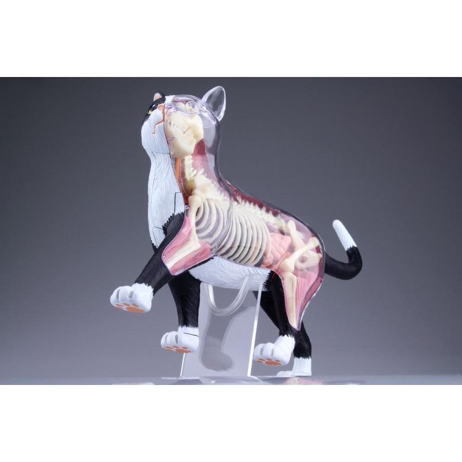 猫解剖モデル 黒/白  4D VISION 動物解剖モデル No.29 #立体パズル|aoshima-bk|12