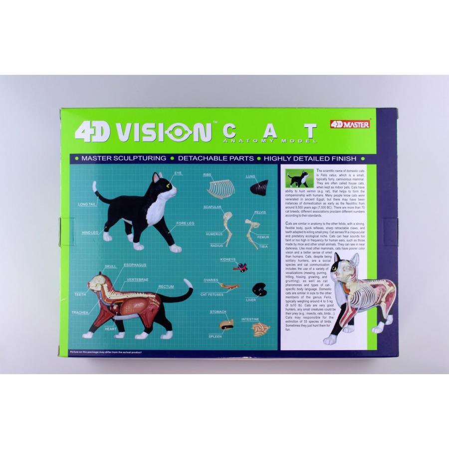 猫解剖モデル 黒/白  4D VISION 動物解剖モデル No.29 #立体パズル|aoshima-bk|15