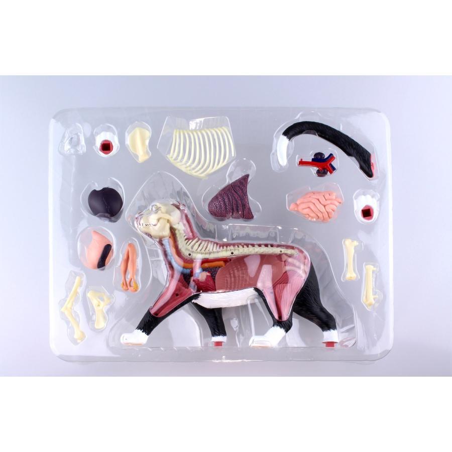 猫解剖モデル 黒/白  4D VISION 動物解剖モデル No.29 #立体パズル|aoshima-bk|16