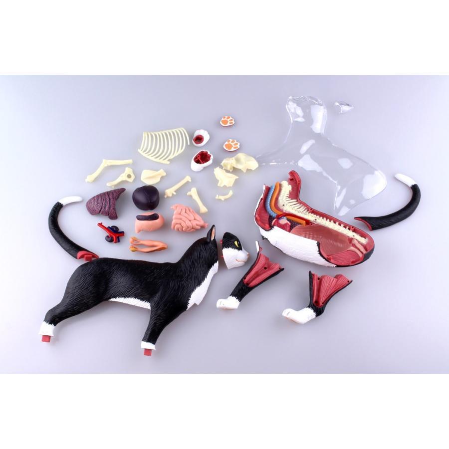 猫解剖モデル 黒/白  4D VISION 動物解剖モデル No.29 #立体パズル|aoshima-bk|17