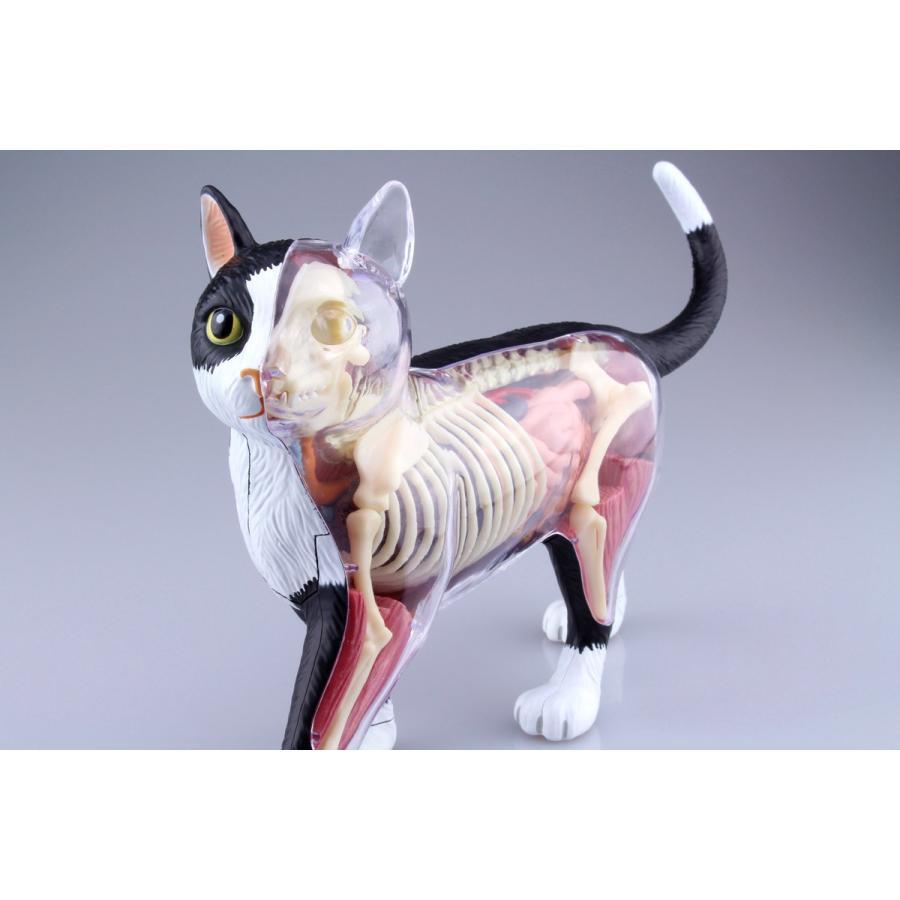 猫解剖モデル 黒/白  4D VISION 動物解剖モデル No.29 #立体パズル|aoshima-bk|07