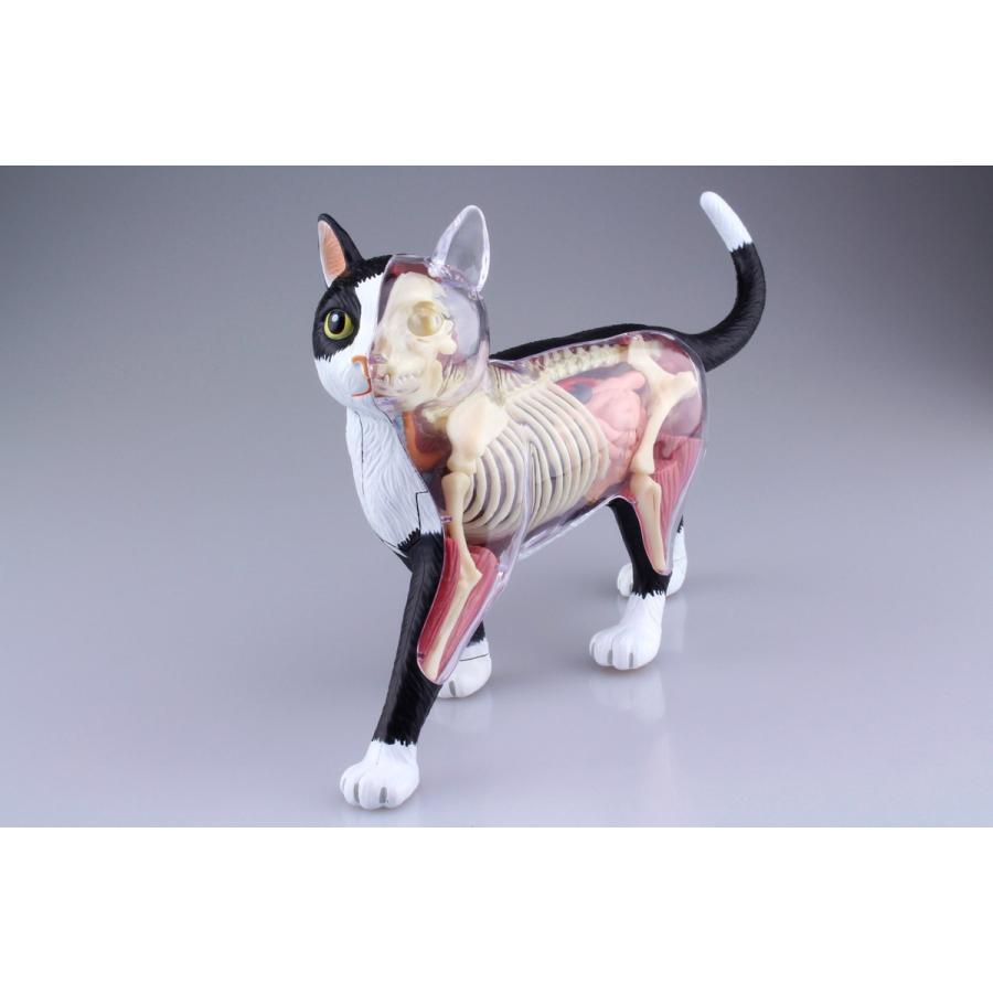 猫解剖モデル 黒/白  4D VISION 動物解剖モデル No.29 #立体パズル|aoshima-bk|08