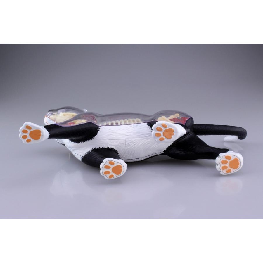 猫解剖モデル 黒/白  4D VISION 動物解剖モデル No.29 #立体パズル|aoshima-bk|09