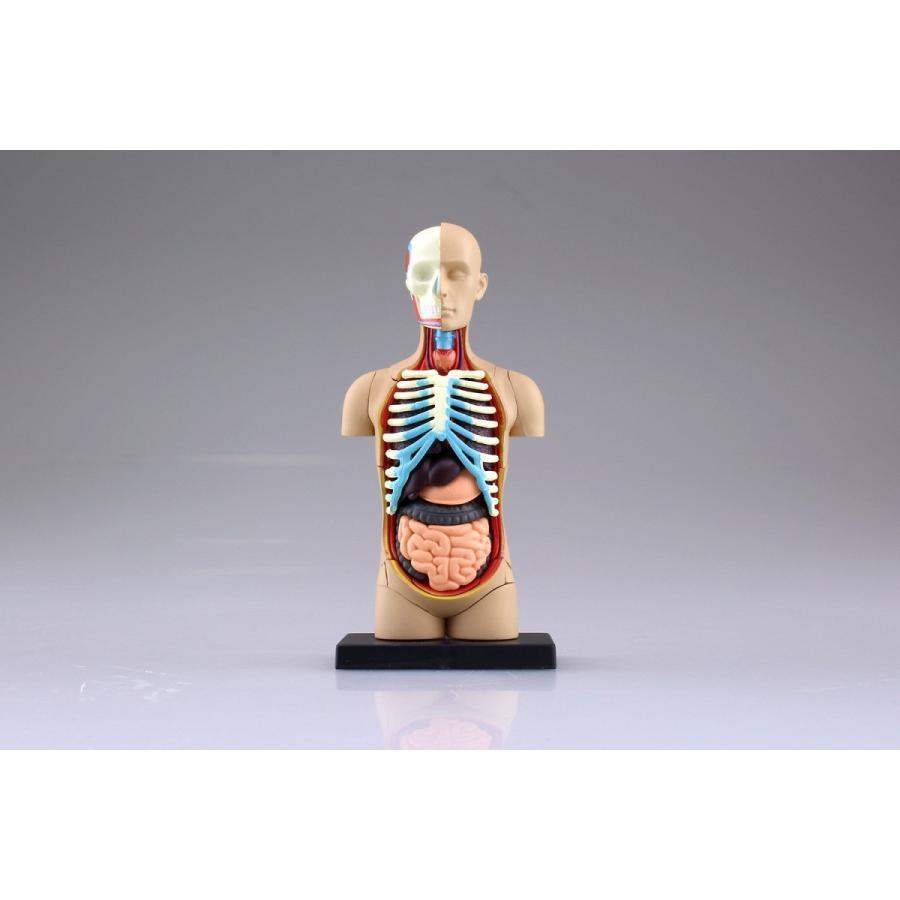 胴体 解剖モデル 4D VISION 人体解剖モデル No.1 #立体パズル aoshima-bk