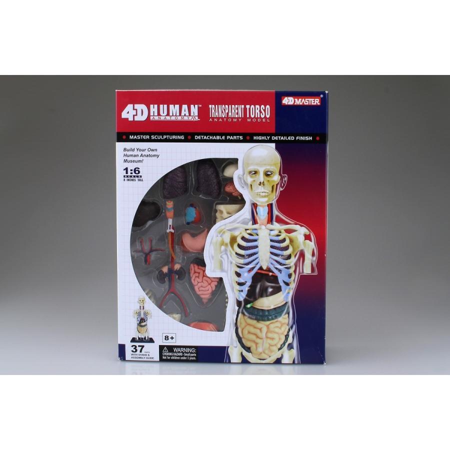 胴体 解剖スケルトンモデル 4D VISION 人体解剖モデル No.14 #立体パズル|aoshima-bk|09