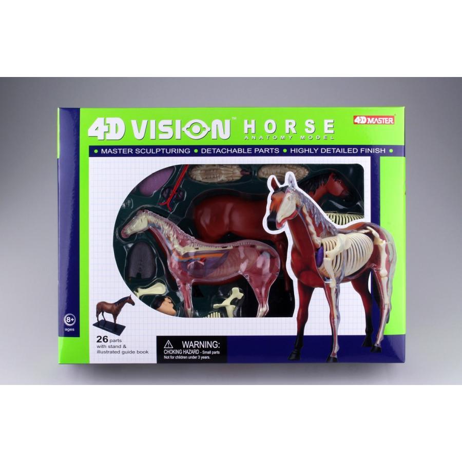 馬 解剖モデル 4D VISION 動物解剖モデル No.04 #立体パズル|aoshima-bk|04