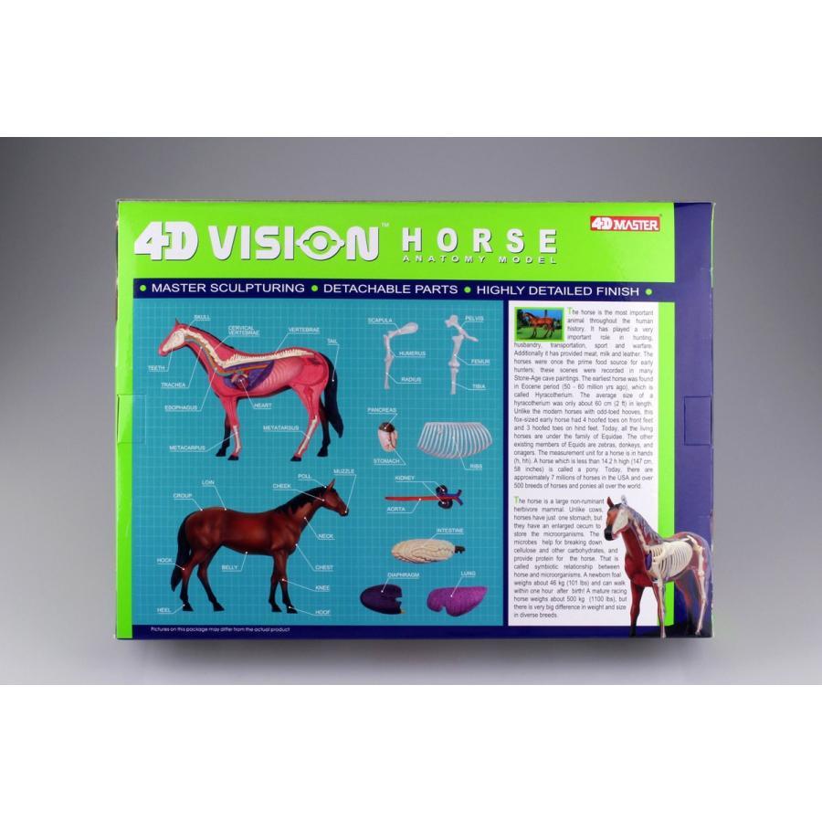 馬 解剖モデル 4D VISION 動物解剖モデル No.04 #立体パズル|aoshima-bk|05