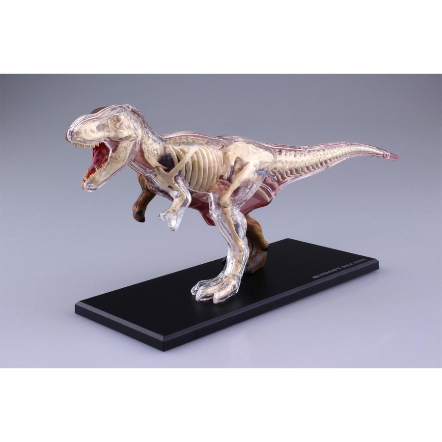 T−REX 解剖モデル 4D VISION 動物解剖モデル No.22 #立体パズル|aoshima-bk|02