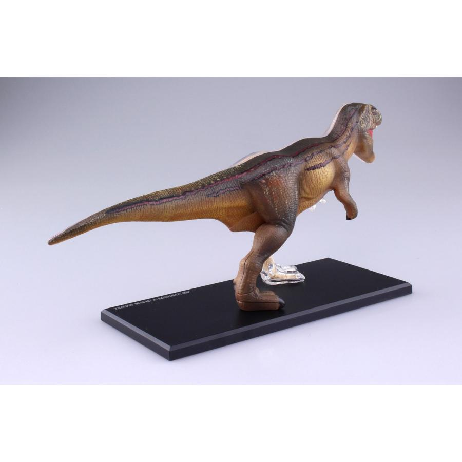 T−REX 解剖モデル 4D VISION 動物解剖モデル No.22 #立体パズル|aoshima-bk|05