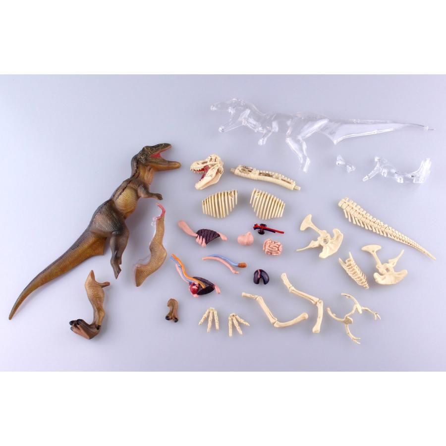 T−REX 解剖モデル 4D VISION 動物解剖モデル No.22 #立体パズル|aoshima-bk|10