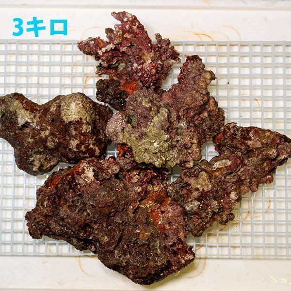 【サンプル】ライブロック 1kgの価格!キュア済み 石灰藻 15時までのご注文で当日発送 aquagift 02