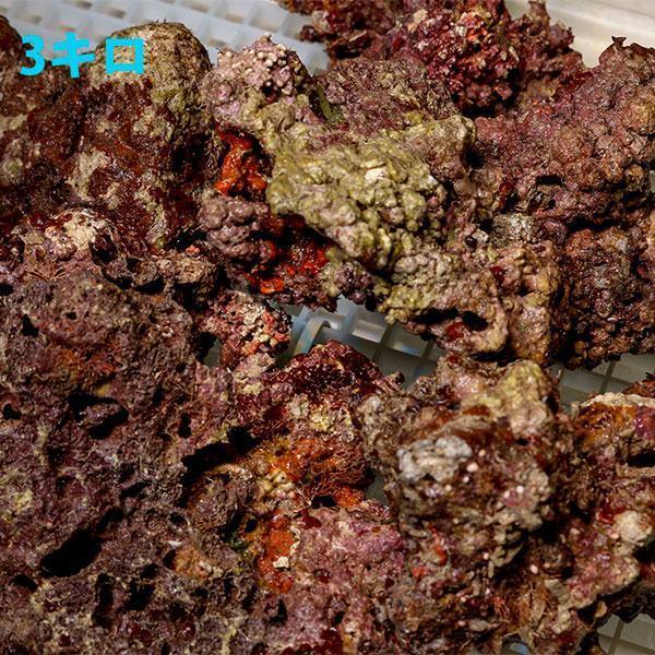 【サンプル】ライブロック 1kgの価格!キュア済み 石灰藻 15時までのご注文で当日発送 aquagift 03
