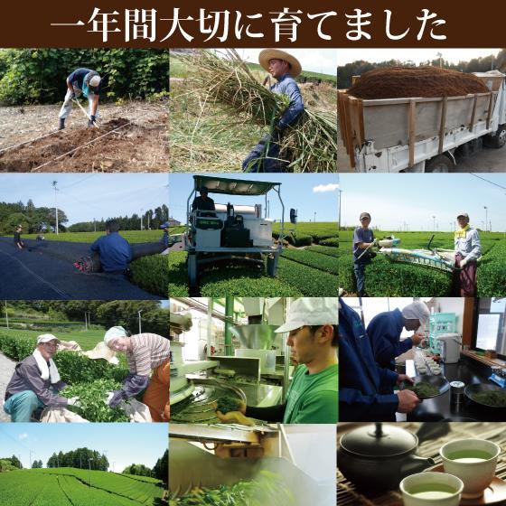 お茶 緑茶 茶葉 プレゼント ギフト 静岡茶 カテキン 高級 極上・初摘・大地の旬3袋箱入 送料無料|arahata|13