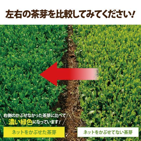 お茶 緑茶 茶葉 プレゼント 茶 ギフト 2021 健康 静岡茶 缶 2種から選べる紅白だるま缶セット 送料無料|arahata|14
