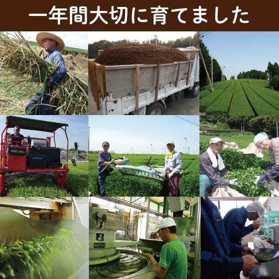 お茶 緑茶 茶葉 プレゼント 茶 ギフト 2021 健康 静岡茶 缶 2種から選べる紅白だるま缶セット 送料無料|arahata|17