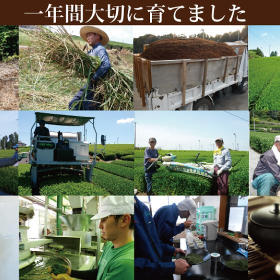 お茶 お試し 緑茶 静岡茶 カテキン 福袋 2021 深蒸し茶 大入り茶葉セット 送料無料 arahata 12