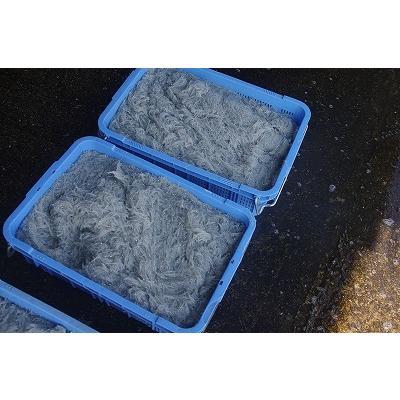 特上しらす干し  シラス 和歌山県 天日干し 乾燥 釜茹で 340g 産地直送 生産者直送 うす塩|arichou-shirasu|05