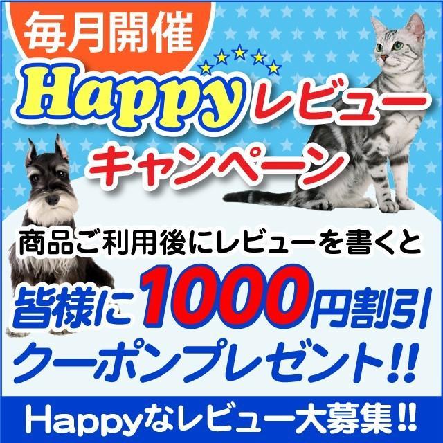 水素水 ペット 犬 猫 水 550ml 10本セット|arkhe|12