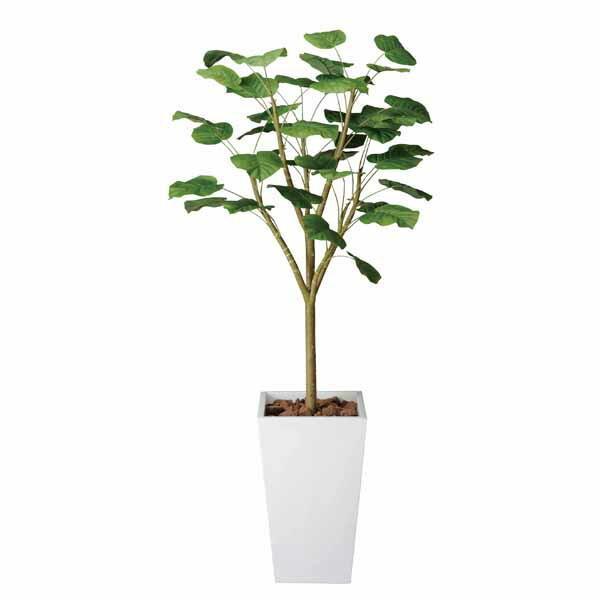 光触媒 観葉植物 人工観葉植物 ウンベラータW 高さ180cm 光触媒観葉植物 フロアタイプ ハイサイズ フェイクグリーン アートグリーン