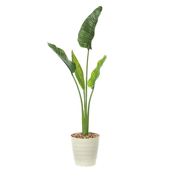 光触媒 観葉植物 植物 人工観葉植物 インテリア おしゃれ グリーン オーガスタ 高さ175cm