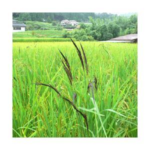 雑穀米ではなくイロイロ米 1合 令和2年産 黒米 赤米 玄米 ありがとんぼ農園|arumama|03