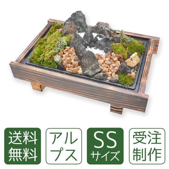苔盆栽 アルプスSS arumama