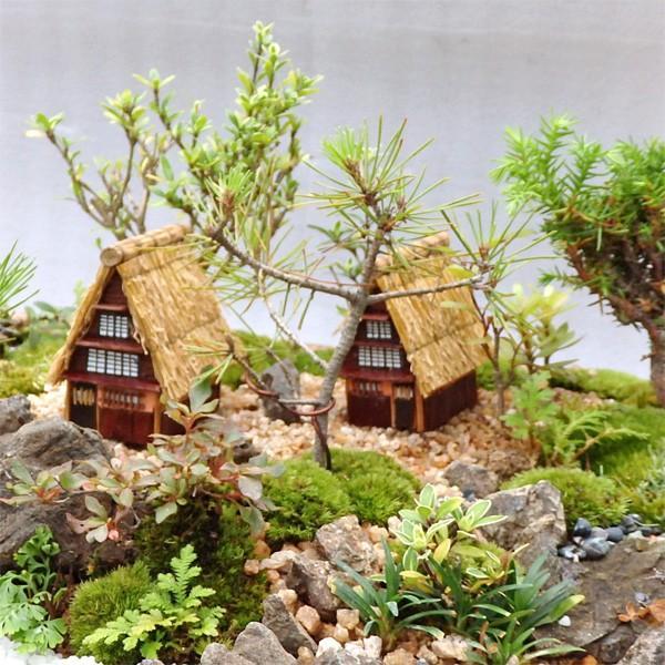 お中元 盆栽 ミニ庭園 盆景【茅葺の里(L)】 arumama 03
