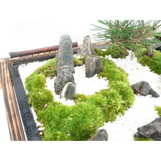 お中元 盆栽 ミニ庭園 盆景【京風庭園(M)】|arumama|02