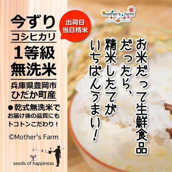 定期購入2kgx12回 令和2年産 玄米 白米 今ずり米 無洗米 農薬不使用 コシヒカリ|arumama|13