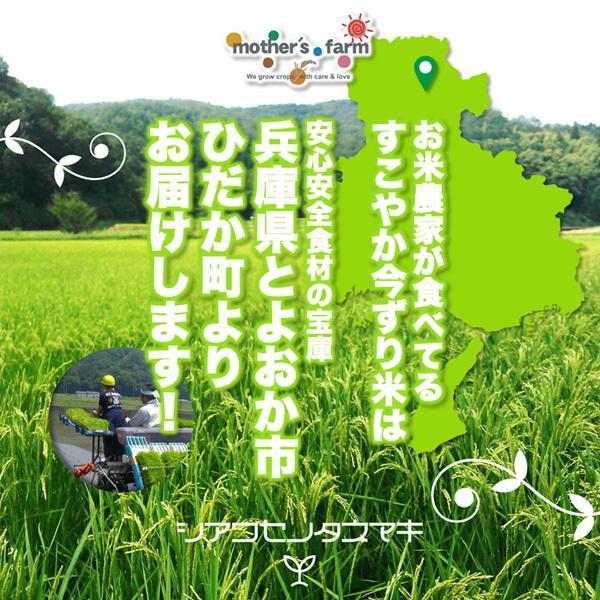 定期購入2kgx12回 令和2年産 玄米 白米 今ずり米 無洗米 農薬不使用 コシヒカリ|arumama|03
