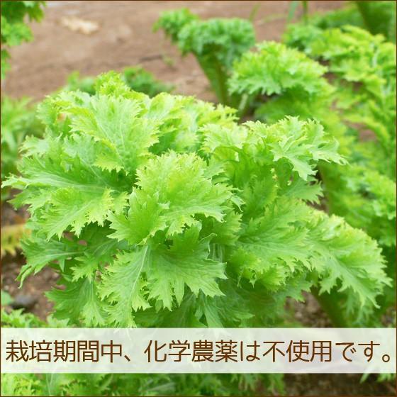 母の日 野菜セット 詰め合わせ お試し 農薬不使用 訳あり 不揃い 送料無料|arumama|03