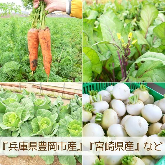 母の日 野菜セット 詰め合わせ お試し 農薬不使用 訳あり 不揃い 送料無料|arumama|04