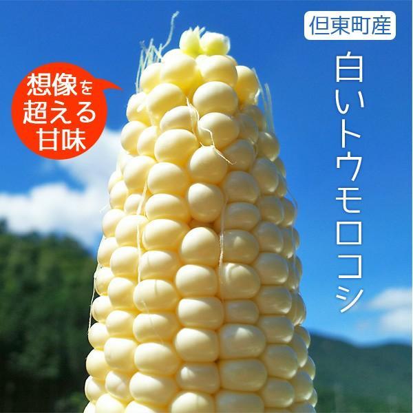 【完売御礼】白いとうもろこし ホワイトコーン ピュアホワイト 雪の妖精 10本セット 生食OK 送料無料|arumama